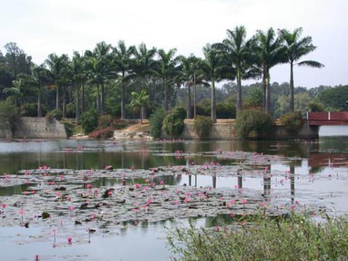 2. Bangalore - Botanischer Garten 02