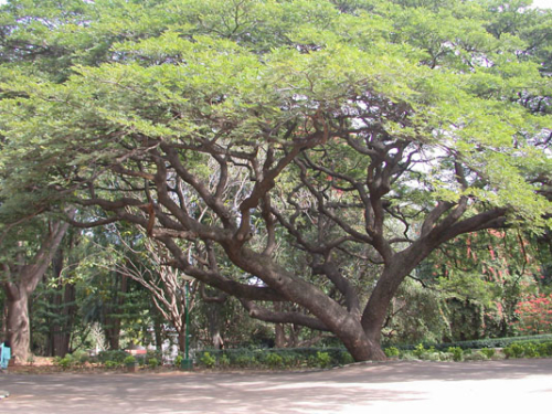 2. Bangalore - Botanischer Garten 03