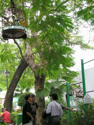 308 - Hongkong - Kowloon Bird Garden